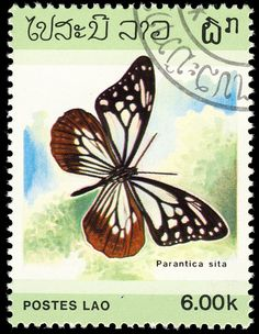 Un sello de Laos Butterfly Park, Butterfly Flowers, Laos, 5sos Wallpaper, Going Postal, Close Up Photography, Vintage Stamps, Stamp Collecting, Mail Art