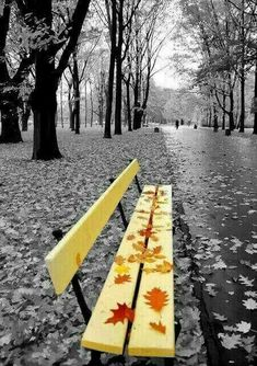 Splash of color Yellow Photography, Splash Photography, Cute Photography, Great Pictures, Nature Pictures, Beautiful Pictures, Black And White Pictures, Black And White Colour, Color Splash Photo