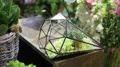 geometric  terrariums Glass Terrarium, Ceramic Planters, Classic Elegance, Artificial Plants, Garden Planters, Air Plants, Wicker, Succulents, Outdoor Decor