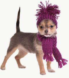 simpatico gorro y bufanda para perro tejida a palillo accesorios para perro tejido a palillo OjoconelArte.cl |