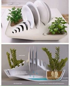 Plate rack that waters plants