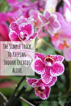 Follow this simple trick to keep your indoor orchids alive for longer!