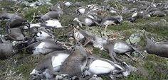 Un rayo mata a 323 renos al sur de Noruega | El Puntero