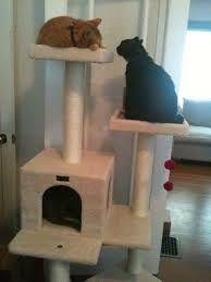 Resultado de imagen para como hacer un gimnasio para gatos paso a paso