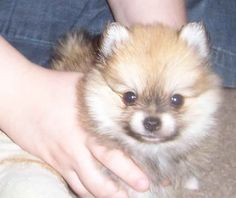 This is what Jack looked like when I got him.