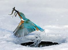 Amazing capture for both bird and man.