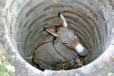 This is the Donkey In The Well Story for kids. Once upon a time, there was a farmer who had a donkey. One day, the donkey accidentally fell down Stories With Moral Lessons, Stories Of Success, Stories For Kids, Animal Memes, Funny Animals, Animal Humor, Well Images, By Any Means Necessary, Motivational Stories