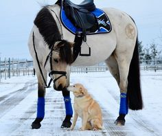This tack is so beautiful on this horse! I want everything in this pic. It's also a cute dog! #Jupinkle