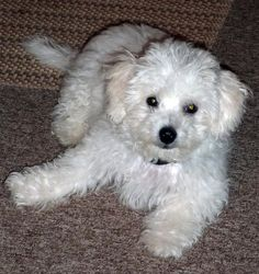 Aspen when he was about 3.5 months old...sooooo cute!