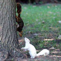 Albino squirrel :)