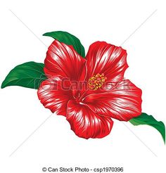 Red hibiscus flower on white background - csp1970396