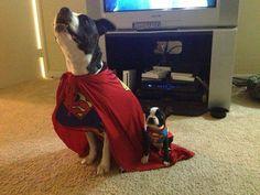 Best Pet Costumes of Halloween 2013