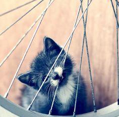 u wont feed me? fine ill ruin ur bike arrrrr