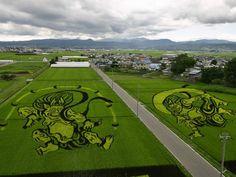 tanbo japanese rice field art