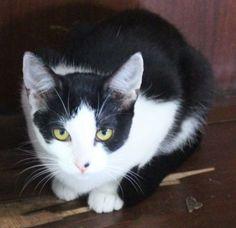 Adote um gatinho Belo Horizonte | Brasil