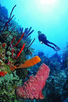 Adventure - Skuba Dive, Great Bareer Reef