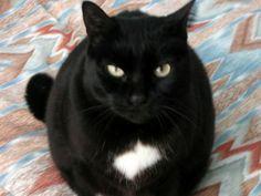 La gatita de Luis. #TopPet 2013: Vótalo o participa tú también: https://basicfront.easypromosapp.com/p/122526