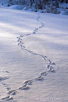 Animal tracks in snow - Dreamstime