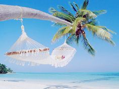 I've always wanted to do this; hang in  a hammock from a palm tree over the water