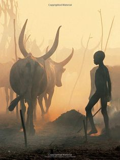Dinka: Legendary Cattle Keepers of Sudan: Angela Fisher, Carol Beckwith