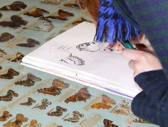 Sketching butterflies within the Entomology store at National Museums Scotland