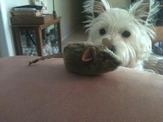 She's eyeing the cat's toy.  My Kensie just takes them!