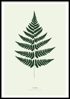 Snyggt print med växt. Vacker poster med grönt ormbunksblad. Botanisk tavla.