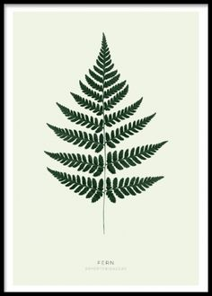 Green fern, plakat