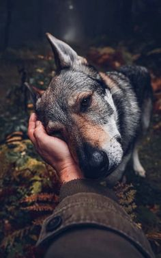 Nature Music, Wolf Pictures, White Wolf, Camping, Dog Training Tips, The Dreamers, Husky, Fox, Backpacker