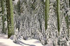 Heavy Snow Print By Garry Gay