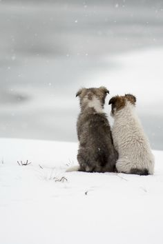 Companions in the snow.