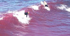 Pink Waves in San Diego: http://hostevie.com/blog/pink-waves-in-san-diego/