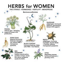 Healing Herbs, Medicinal Plants, Natural Healing, Magic Herbs, Herbal Magic, Natural Medicine, Herbal Medicine, Les Chakras, Book Of Shadows