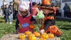 Celebrate the season with these amazing harvest festivals in NYC where all ages will enjoy pumpkin-picking, local produce, corn mazes and other activities Nyc Holidays, Nyc Fall, Pumpkin Picking, Things To Do, Good Things, Child Life, Kids Events, Halloween Candy, Creepy