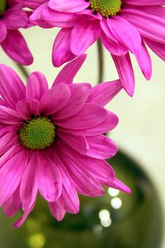 Pink and Green together. Beautiful flowers