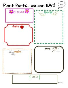 edible plant parts graphic organizer for student use.