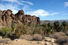 Looking for family friendly hikes in Palm Springs? Look no further than Indian Canyon. Multiple, easy family trails that are even accessible when it's hot!
