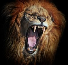 Fierce by Klaus Wiese. (Looks more like a yawn to me... but tis awesome, regardless!)