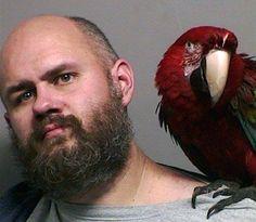 Americano posa para a foto da polícia com arara de estimação no ombro - http://anoticiadodia.com/americano-posa-para-a-foto-da-policia-com-arara-de-estimacao-no-ombro/