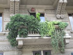 Urban balcony plenty of ivies