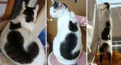 猫の模様のある猫