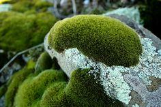 I love moss.