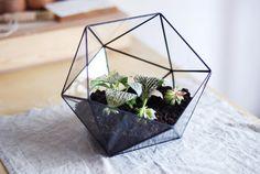 "Geometric glass terrarium ""icosahedron"" - handmade glass terrarium - planter for…"