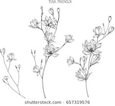 Pink magnolia flowers drawing and sketch with line-art on white backgrounds - buy this vector on Shutterstock & find other images. Flower Line Drawings, Flower Sketches, Drawing Sketches, Drawing Flowers, Art Drawing Images, Art Drawings, Anemone Flower, Flower Art, Cosmos Flowers