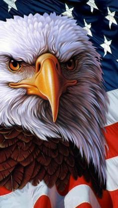 Awesome Harley Davidson photos are readily available on our web pages. Eagle Images, Eagle Pictures, Cool Pictures, American Flag Wallpaper, Eagle Wallpaper, American Flag Eagle, American Pride, Eagle Drawing, Eagle Painting