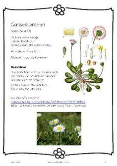 herbarium on pinterest vorlage and html. Black Bedroom Furniture Sets. Home Design Ideas