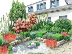 Ganz modern kommt dieser Entwurf mit quadratisch geschnittenen Immergrünen, Perückenstrauch-Hochstämmchen, Gräsern und Kiesflächen daher