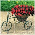 A tricycle built for plants! How perfect.   http://www.avantgardendecor.com/store/decorative-planters/trcfp-b