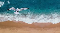 Free Image on Pixabay - Seascape, Seagull, Ocean, Water Ocean Sounds, Nature Sounds, Yoga Meditation, Vacation Destinations, Vacation Trips, Free Pictures, Free Images, Shorebirds, Lights