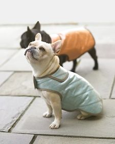 Pamper your pooch with Martha's well fitted, adjustable water-resistant doggy coat. It's a favorite of Francesca and Sharkey to stay dry and warm on cold winter days.